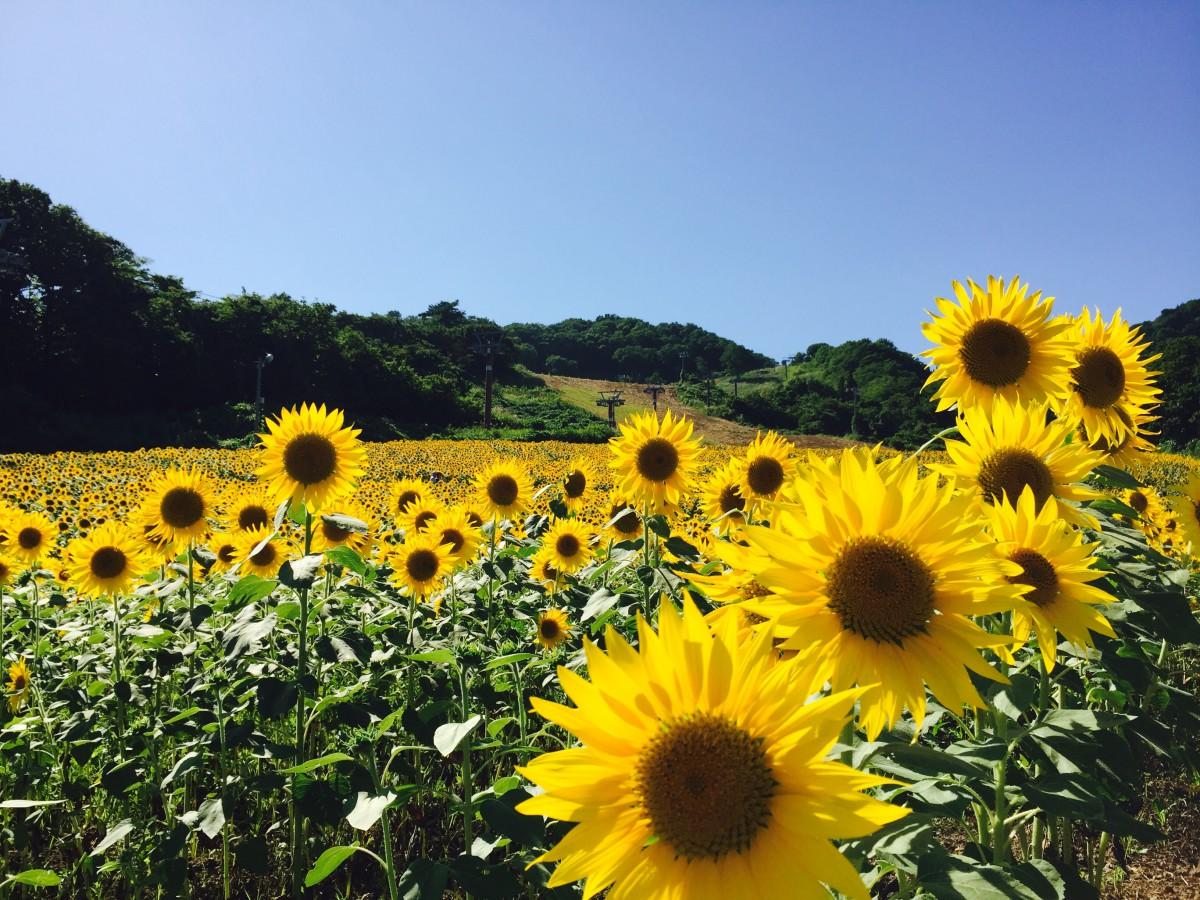 皆様の楽しい夏をサポートさせて頂きます!お得なキャンペーン情報💕